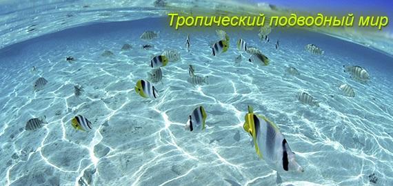 Тропический подводный мир